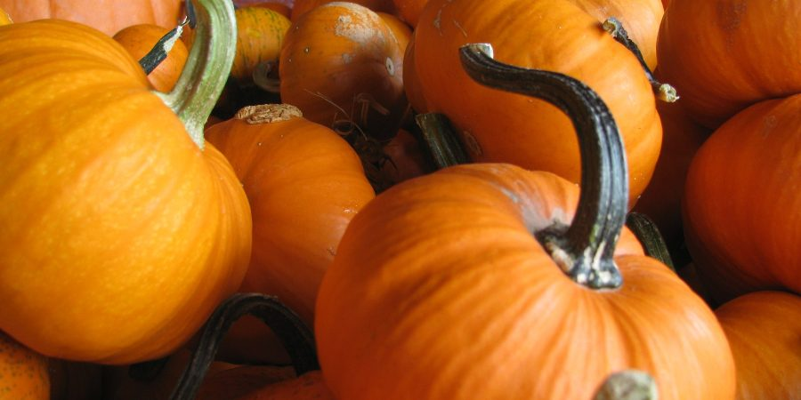 Reminder it's Saturday: Aurora food pantry to gift 500 pumpkins at fall fest